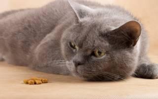 Кот после кастрации не ест: причины голодания и полезное питание