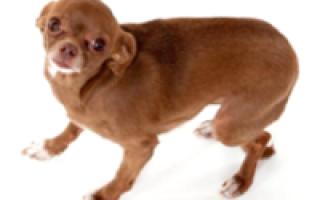 Почему у собаки трясется челюсть