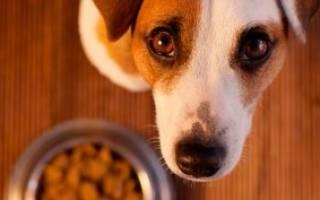 Трапеза – корм для собак