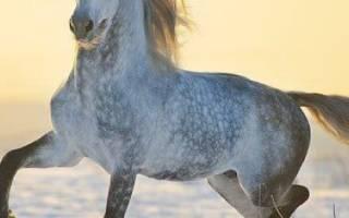 Орловский рысак: порода лошадей