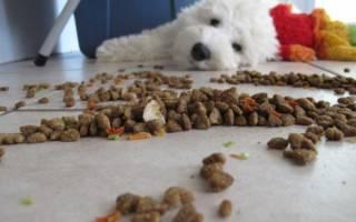 Как понять, что корм не подходит собаке: признаки, симптомы