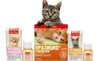 Празицид для кошек: характеристики препарата, применение и дозировка