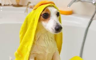 Как купать собаку