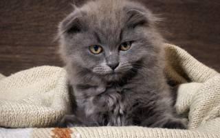 Песок в мочевом пузыре у кошки: причины, диагностика, лечение