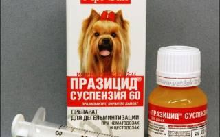 Празицид для собак – надежный и эффективный препарат