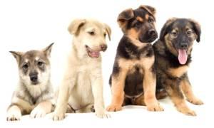 Как правильно выбрать породу собаки