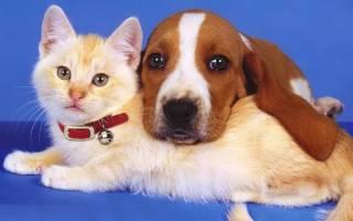 Энтомозы – волосяные кровососы у кошек и собак. Лечение и профилактика