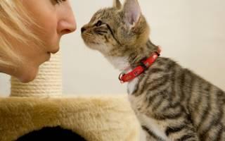 Диагностика и лечение гайморита у кошек