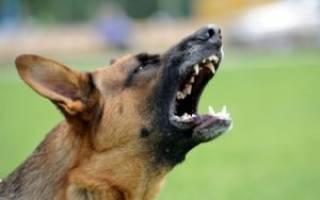 Почему собаки облаивают людей: причины и способы борьбы с вредной привычкой