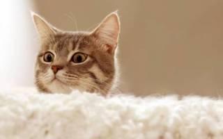 Есть ли у кошки душа?