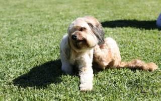 Лечим расчесы у собак: главное, что нужно знать владельцу
