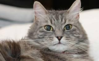 Что означают выделения у кошек перед родами