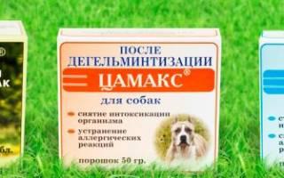 Цамакс для собак: назначение, применение и дозировка
