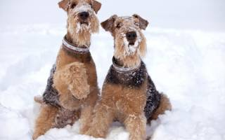 Обморожение лап у собак: важные моменты первой помощи