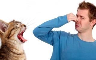 У кота неприятный запах изо рта