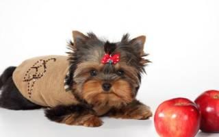 Дисбактериоз у собак: симптомы и способы лечения