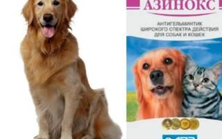 Азинокс для собак: назначение и порядок применения