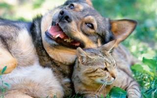 Сибирская язва — смертельно опасная болезнь у собак и кошек