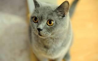 Кошка хрюкает при дыхании: возможные причины непонятных звуков