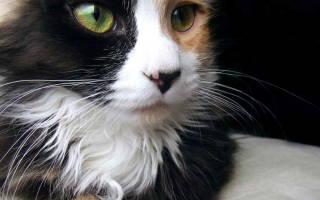 Почему у котёнка сухой нос