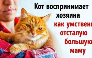 Человек и кошка: друзья или нет?