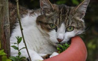 Кожный рог — наросты на коже у кошек
