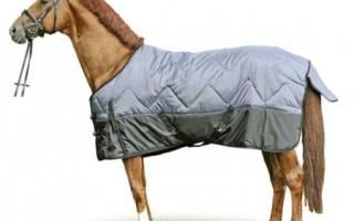 Попона для лошади: выкройка и шитье