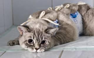 Сколько кошка отходит от наркоза после стерилизации: правильный уход в первые часы
