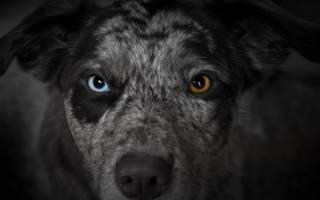 Почему у собак светятся глаза: что является нормой и когда стоит волноваться