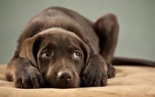 Что делать, если собака боится