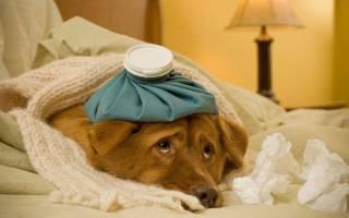Пневмония у собак — признаки, диагностика и лечение воспаления лёгких