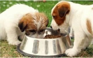 Можно ли сухой корм давать собаке