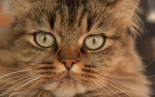 Антибиотики для кошек и котов