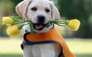 Ласковые породы собак