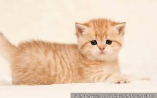 Кот или кошка: какого пола животное завести