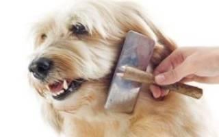 Щетка для вычесывания собак
