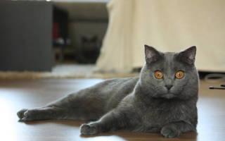 Микозы — грибковые заболевания у кошек