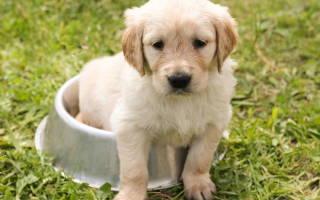 Понос у щенка в 4 месяца: причины, диагностика, лечение