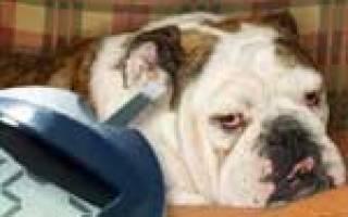 Несахарный диабет у собак и кошек: причины, диагностика и лечение