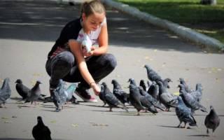 Чем кормить голубей: запрещенные продукты