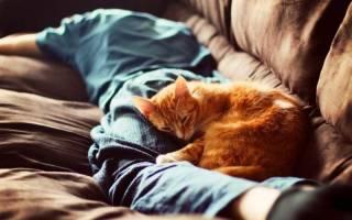 Почему кошки спят в ногах: 7 вероятных причин