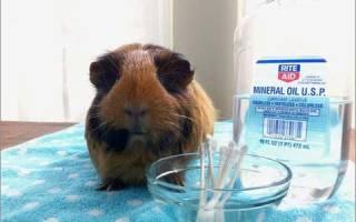 Лекарства для морских свинок