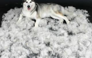 Линька у собак доставляет много хлопот? Всё о физиологии, породах и питании
