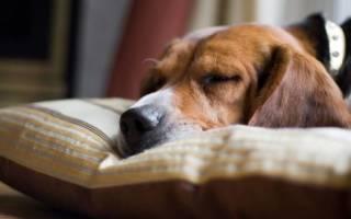Воспаление лимфоузлов у собаки: формы, причины и лечение