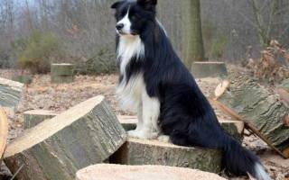 Болезни почек у собак: симптомы и лечение