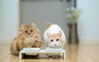 Можно ли кошкам молоко — вся правда о молочном продукте