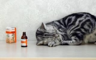 Почему коты любят валерьянку?