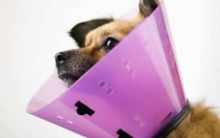 Как снять швы у собаки: подготовка и пошаговая инструкция
