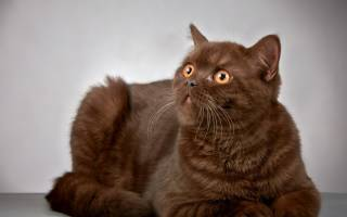 Какая нормальная температура у кошки в организме