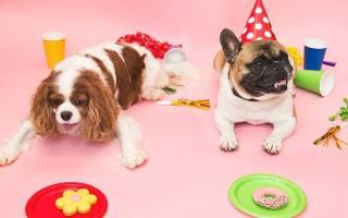 Как отпраздновать день рождения собаки?